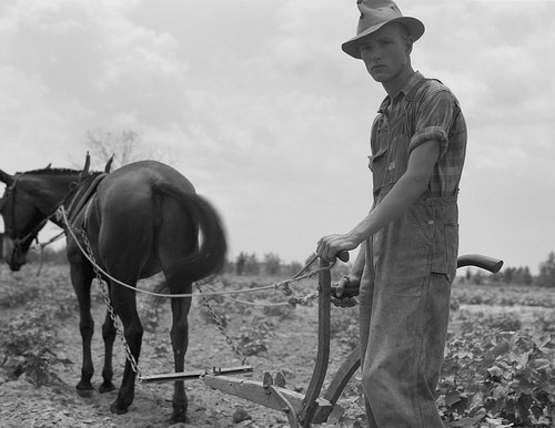 Pictured is the oldest son of a sharecropper family at work in the cotton near Chesnee, South Carolina. Photo credit to Dorothea Lange, Library of Congress image.
